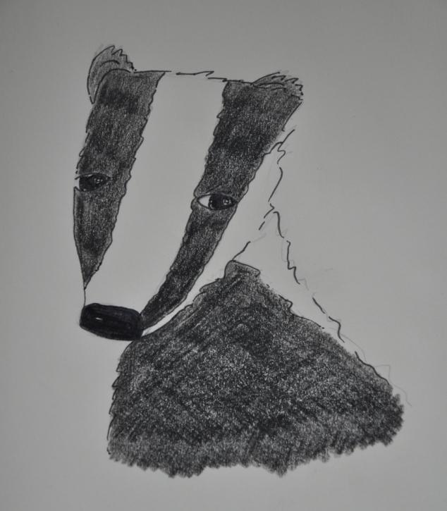 Badger Doodle