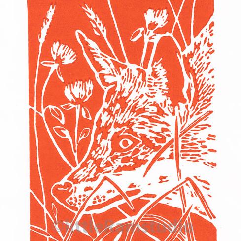 Fox In Clover