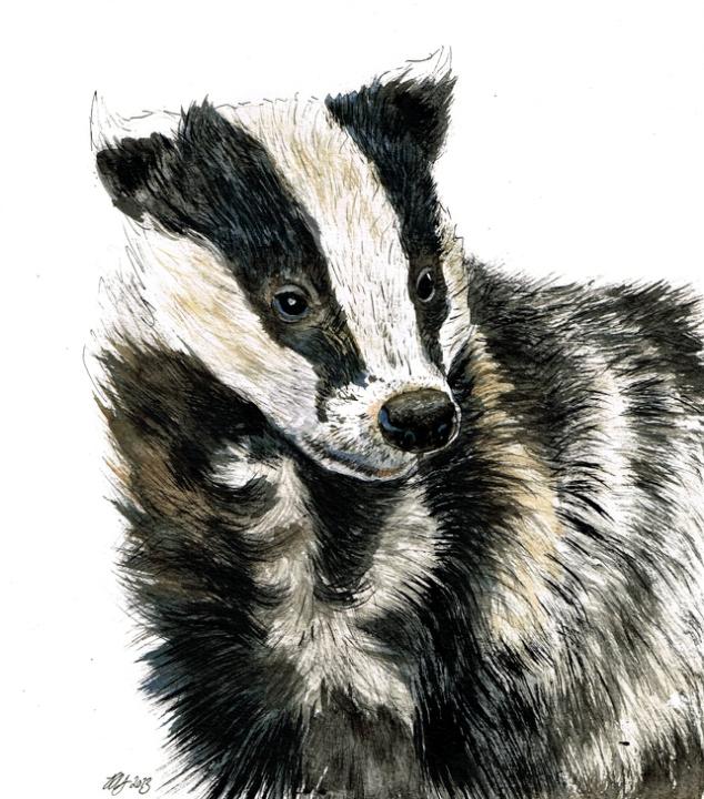 Truffle Original of a Badger