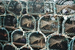 Jan 14th -Lobster Pots