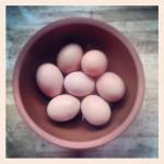Jan 26 - Eggs