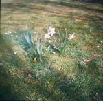 March 21 - Garden Flowers