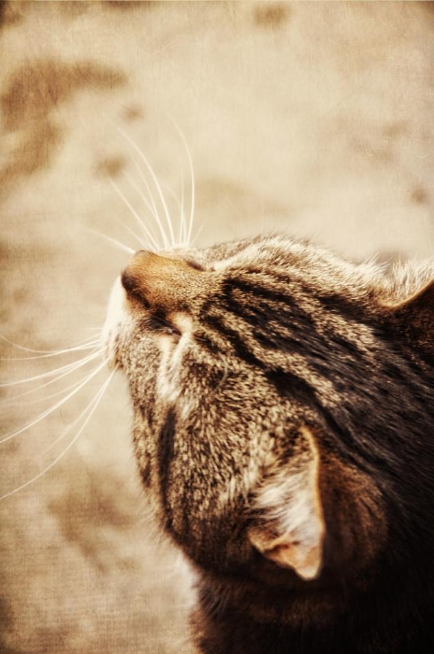 Kitty Textured