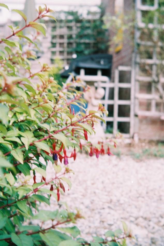 1st - Garden