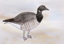 brent goose