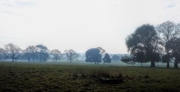 trees-in-the-mist-small
